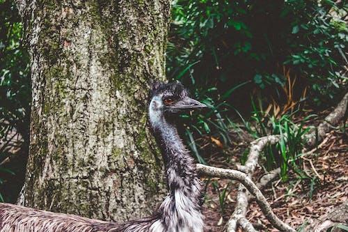 サファリ, ジャングル, トランク, トロピカルの無料の写真素材