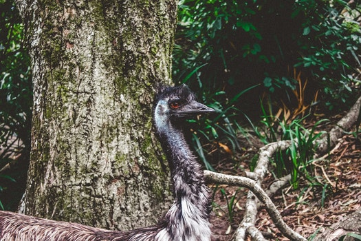 Free stock photo of nature, bird, tree, zoo