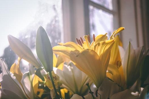 Free stock photo of sun, yellow, petals, lens flare