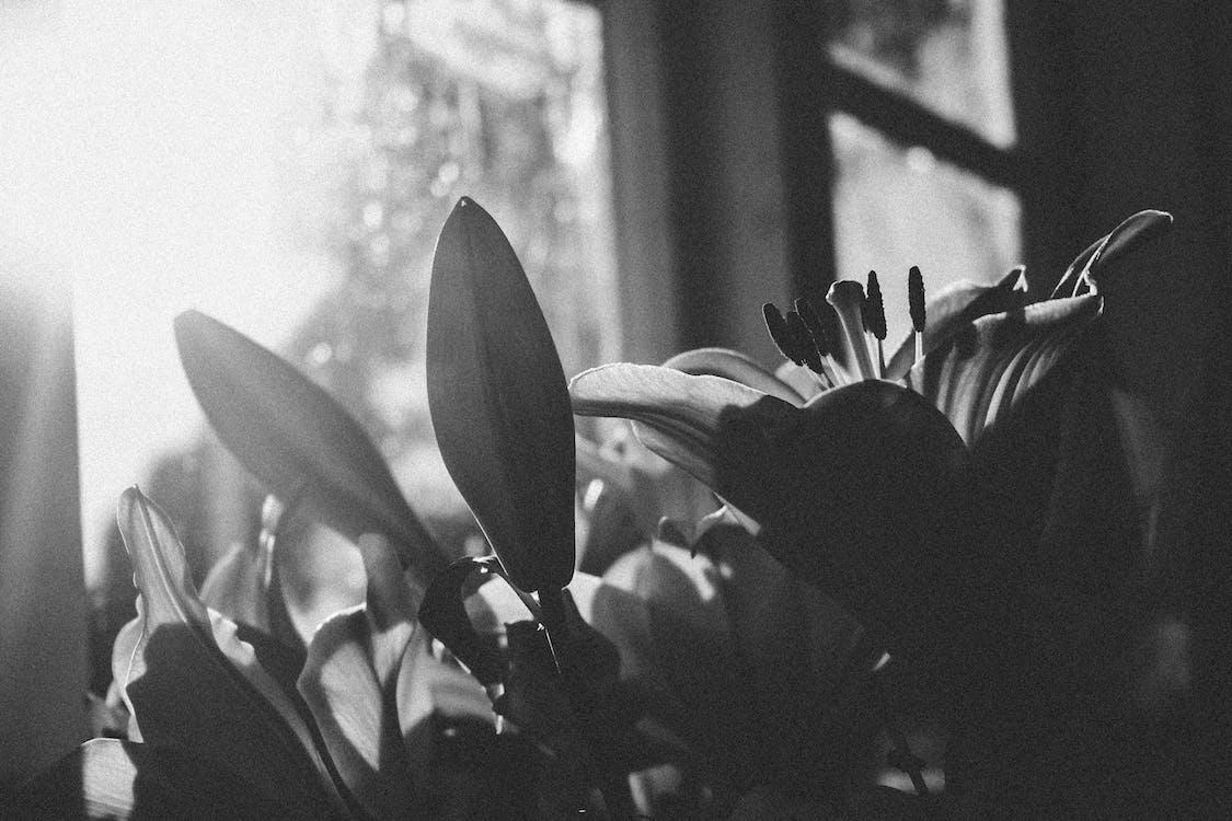 alb-negru, bec, creștere
