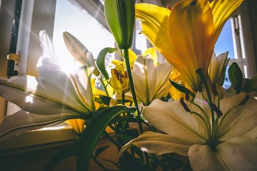 Foto stok gratis bohlam, bunga, bunga kuning, kelopak