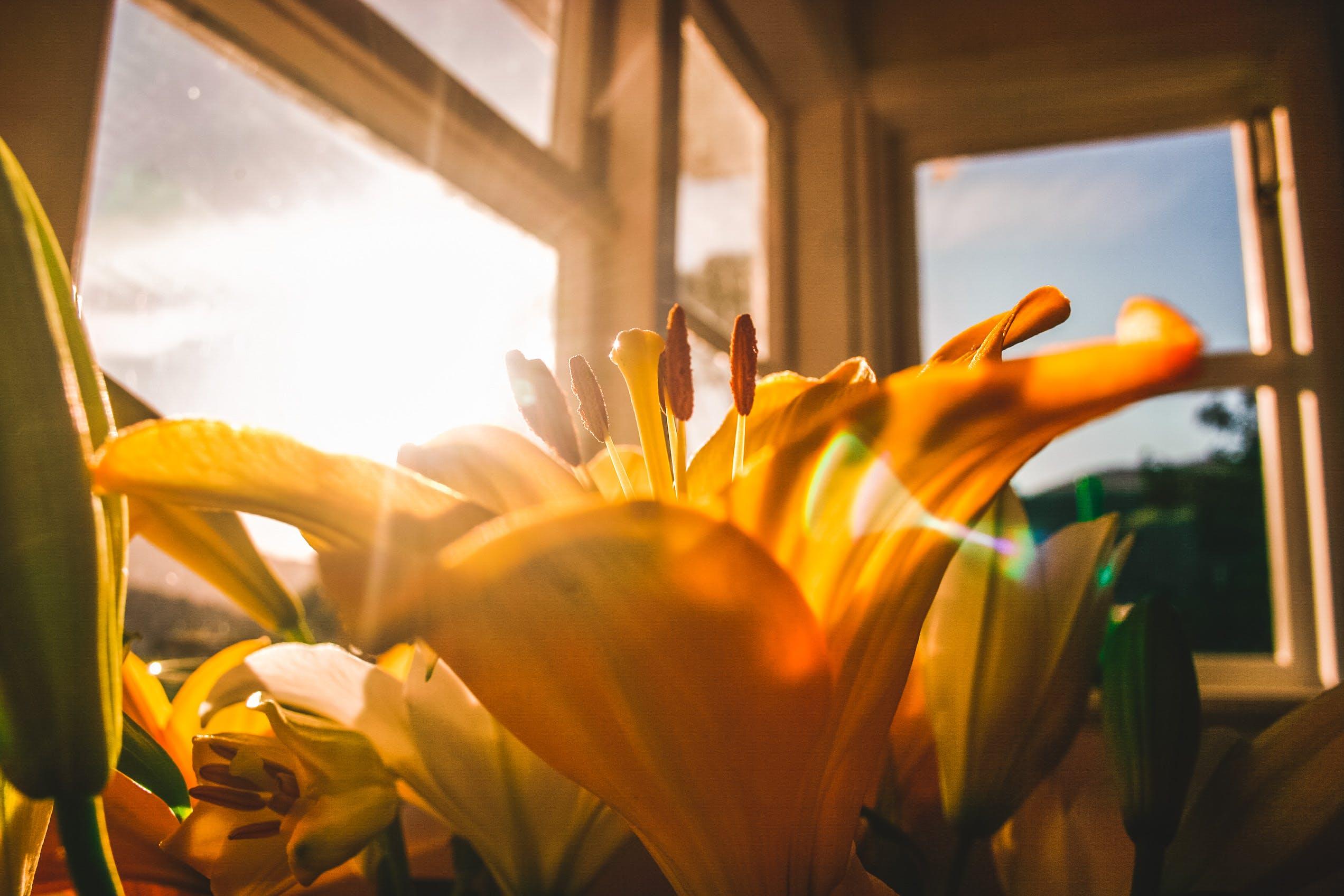 Kostenloses Stock Foto zu blume, blüte, blütenblätter, drinnen