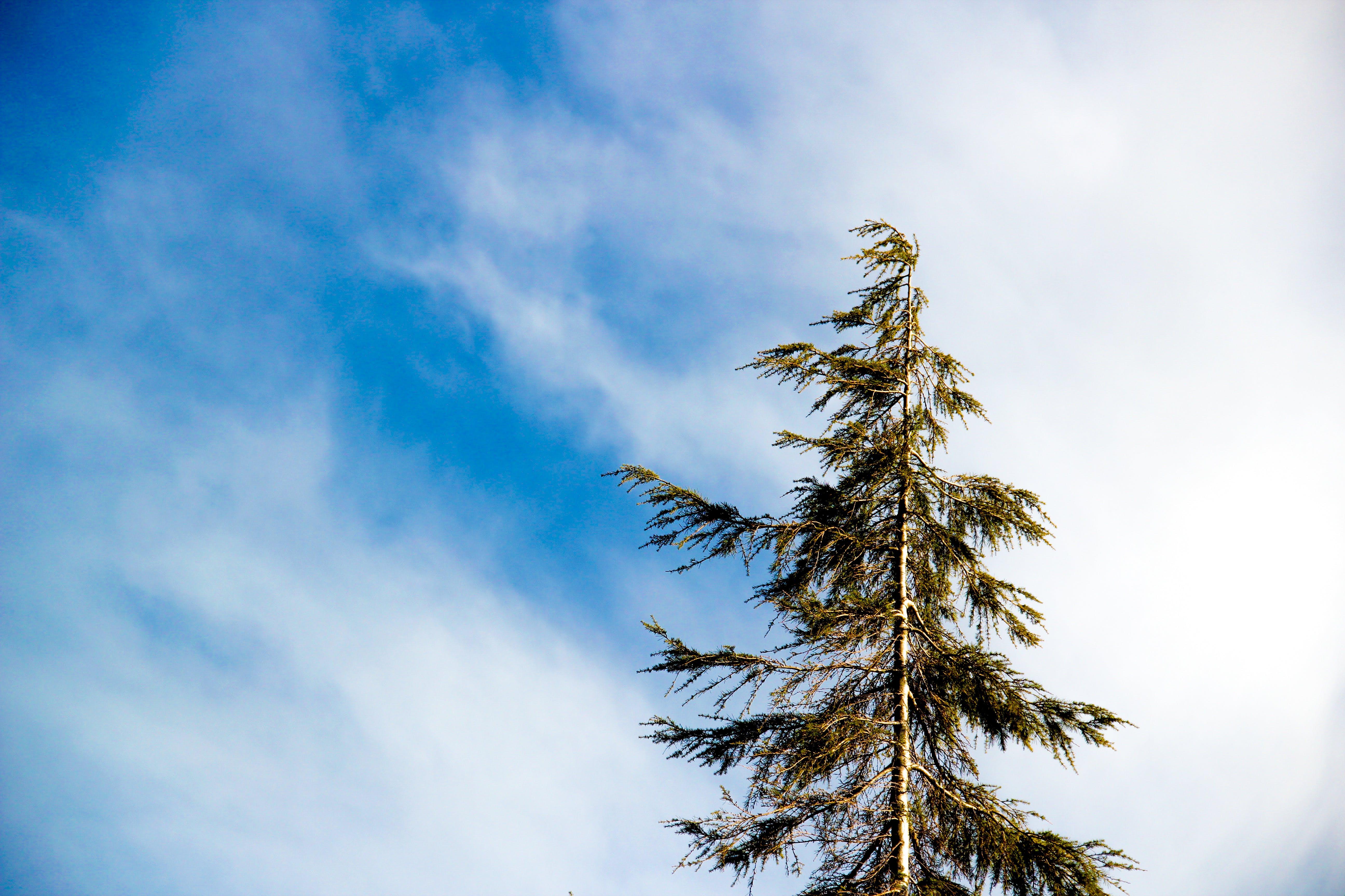 Worm's Eye Photography Green Leaf Tree