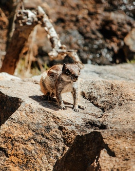 Kostenloses Stock Foto zu natur, wüste, felsen, tier