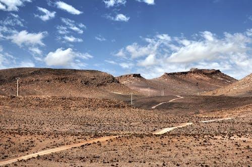 オアシス, サハラ, ドライの無料の写真素材