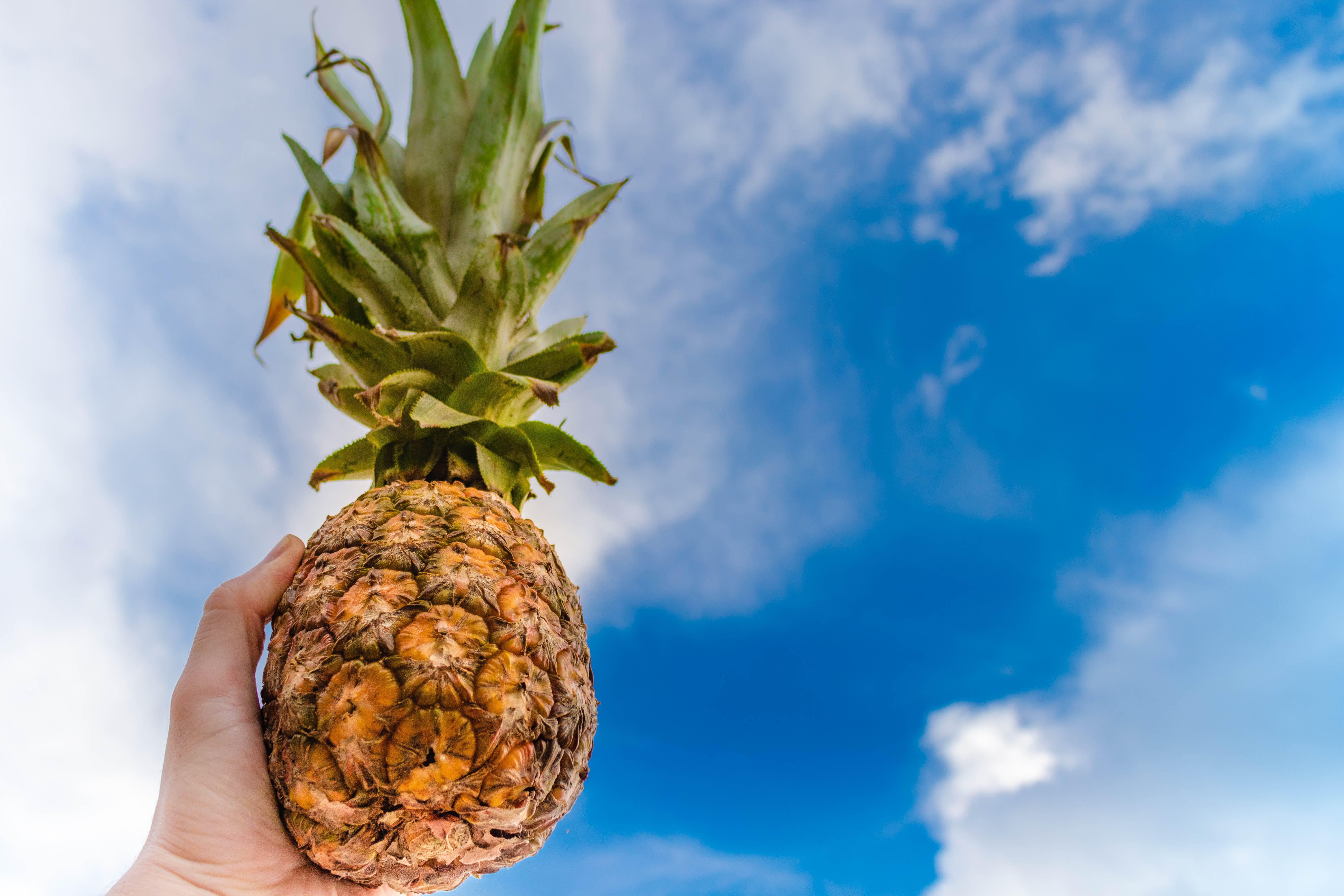 Human Left Hand Holding Pineapple While Raising on the Sky