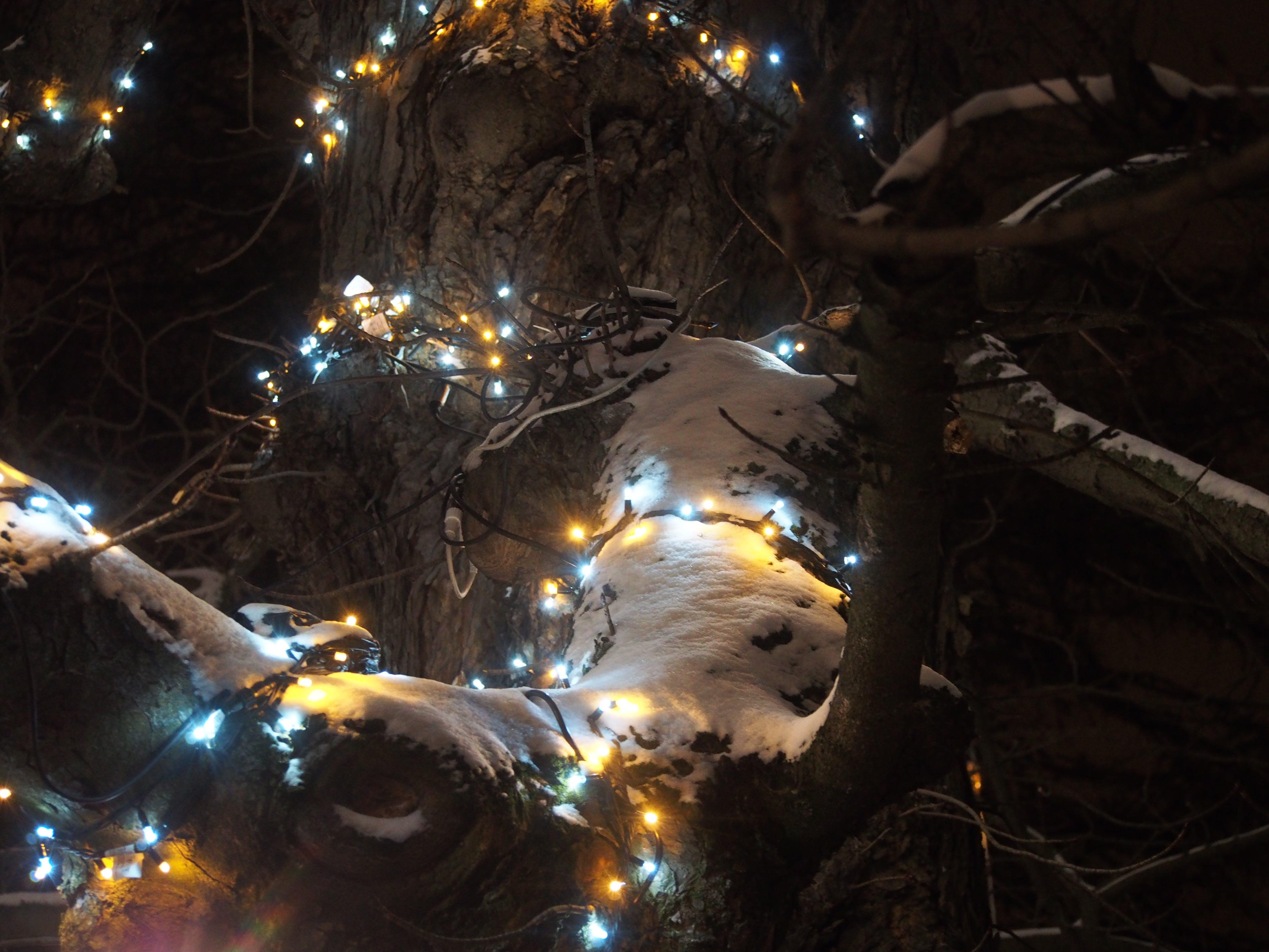Free stock photo of #lights # tree # christmas