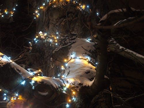 Foto stok gratis #light # tree # natal