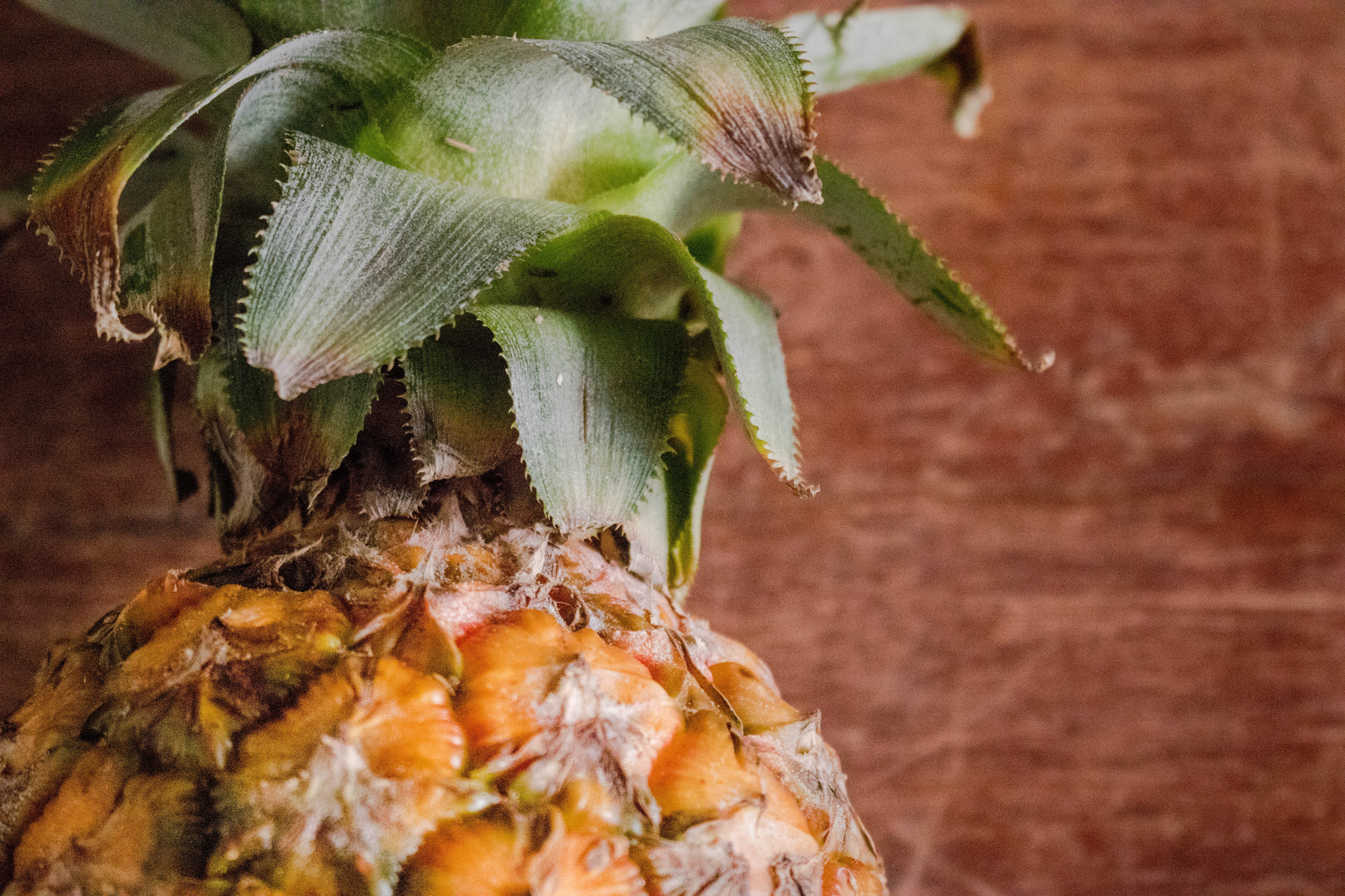 Gratis stockfoto met ananas, bloemen, close-up, eten