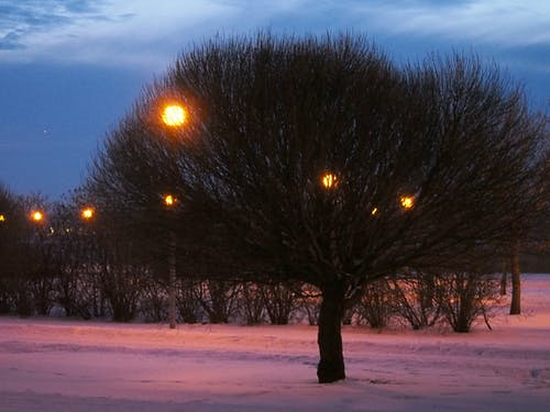 Foto stok gratis #cahaya, #outdoorchallenge, #penerangan, #pohon