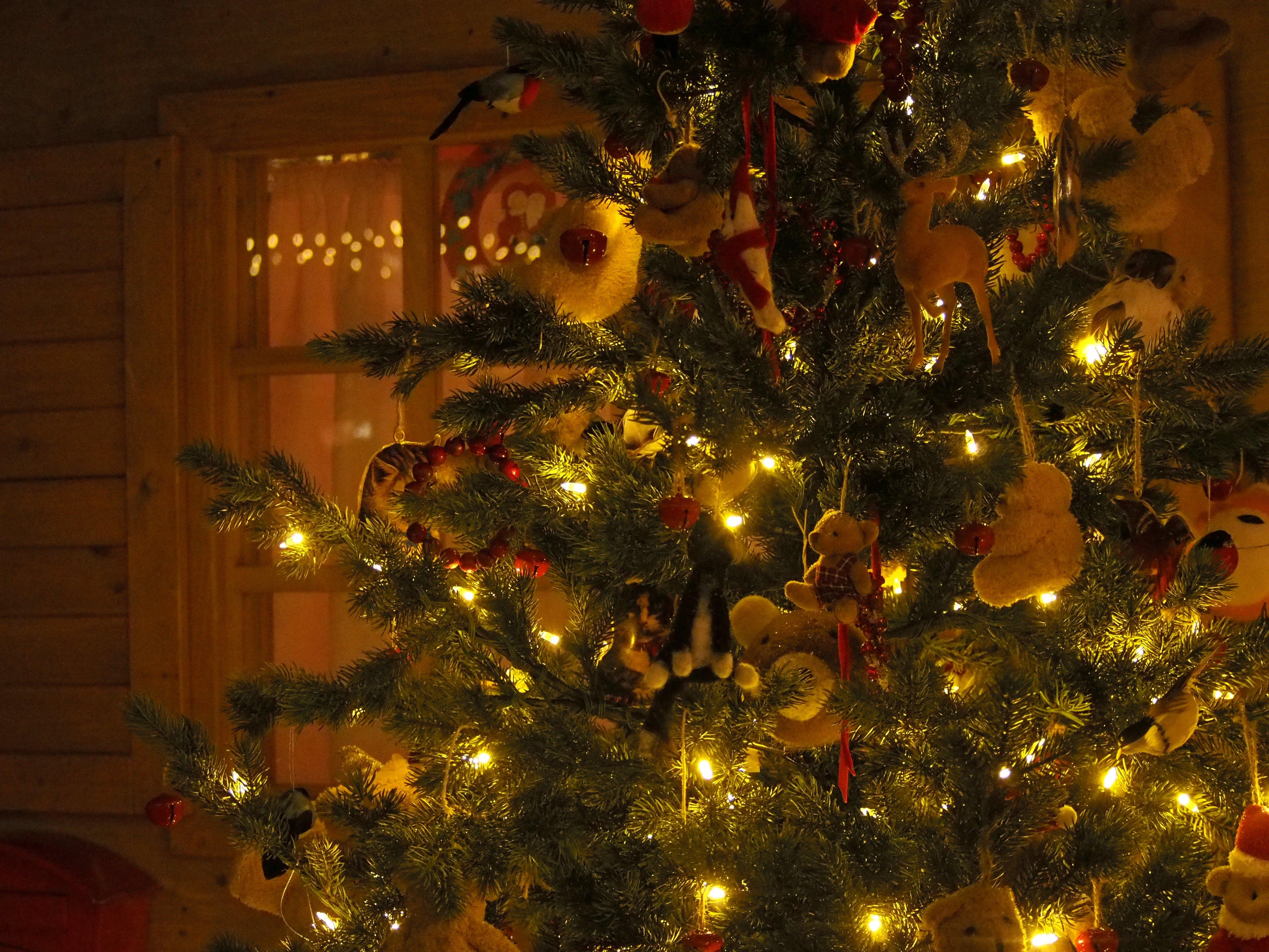 Free stock photo of # lights, #christmas, #christmas tree, #teddy bears