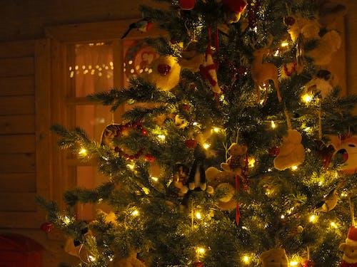 Foto stok gratis # lampu, #boneka beruang, #hari natal, #pohon natal
