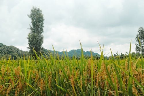 Darmowe zdjęcie z galerii z deszczowa pogoda, dolina górska, piękna natura