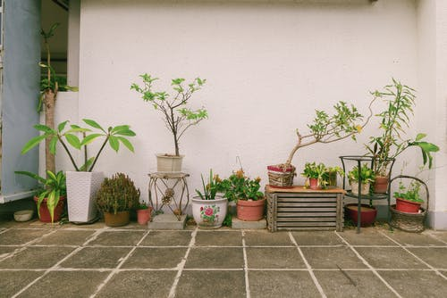 Free stock photo of plants, pot, roof, wall