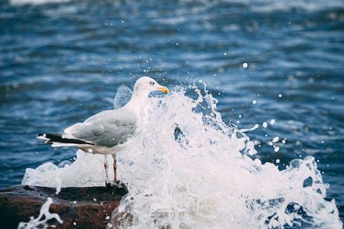 Fotos de stock gratuitas de agua, al aire libre, animal