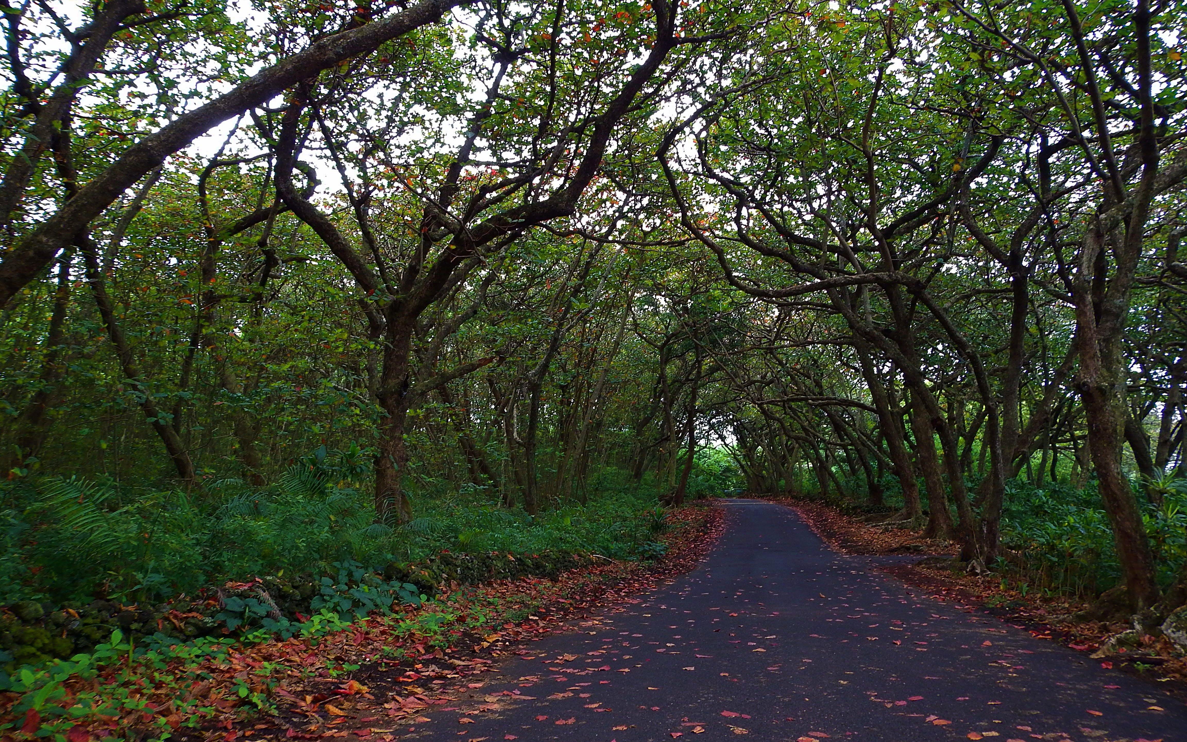 Empty Road Between Green Trees