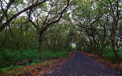 Fotobanka sbezplatnými fotkami na tému cesta, denné svetlo, krajina, les