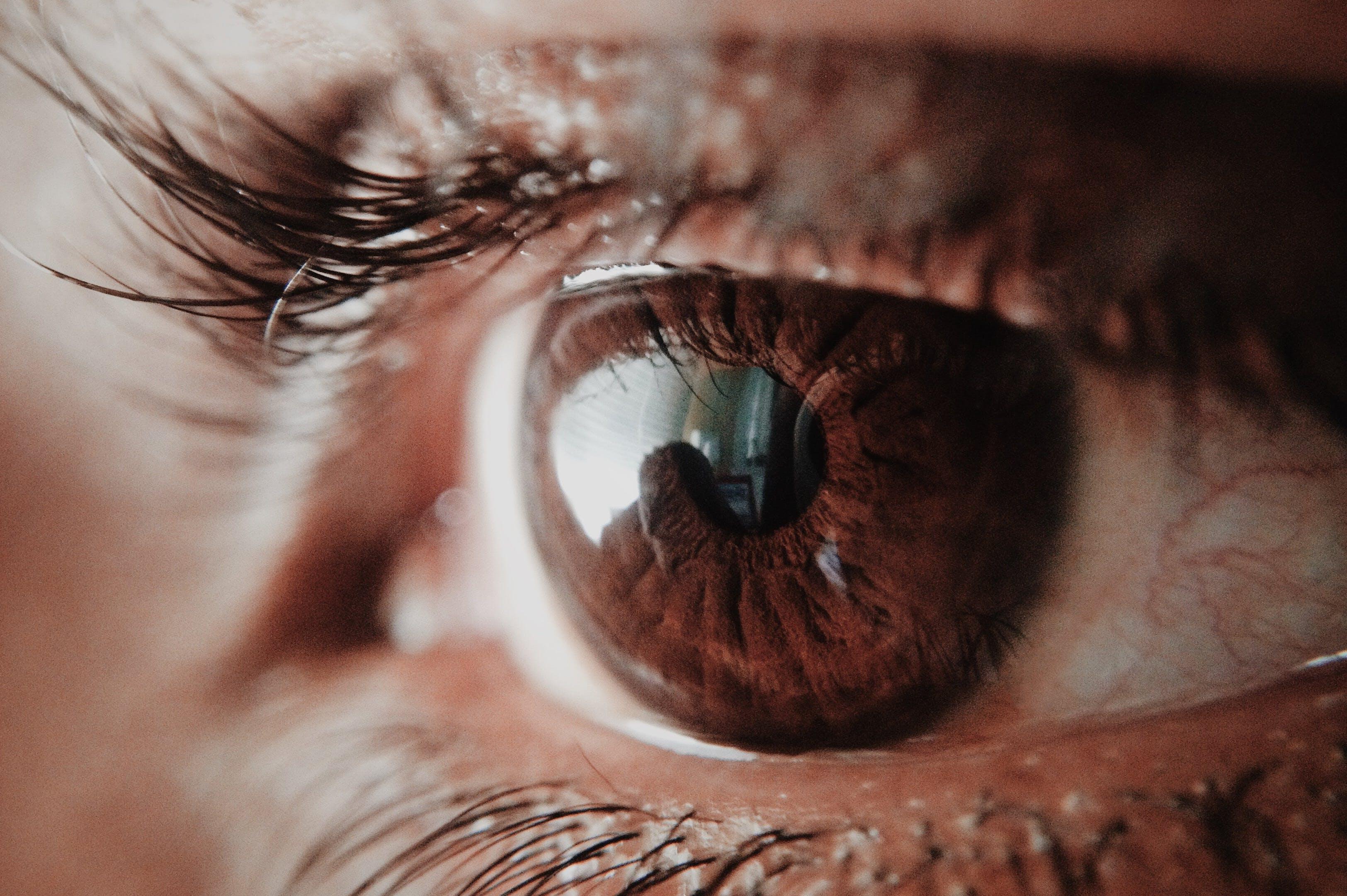 adulto, bulbo oculare, ciglia