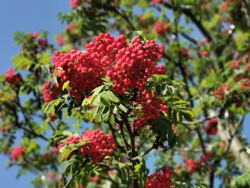 kırmızı ve yeşil ağaç içeren Ücretsiz stok fotoğraf