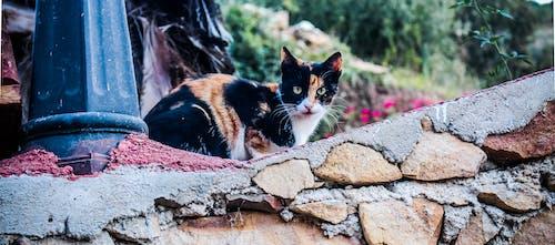 Ilmainen kuvapankkikuva tunnisteilla kissa