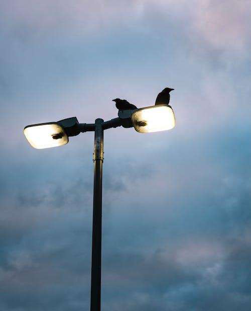 Základová fotografie zdarma na téma divočina, elektřina, jasný