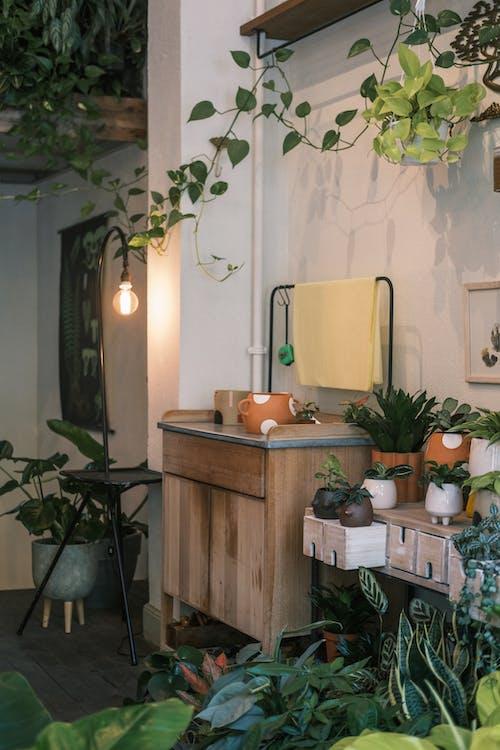 Základová fotografie zdarma na téma aranžování květin, design interiéru, doma