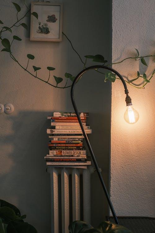 Základová fotografie zdarma na téma architektura, design interiéru, klasický