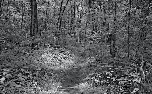 Free stock photo of dirt, dirt path, grass