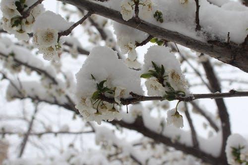 눈, 눈 내리는, 미샤브, 봄철 겨울의 무료 스톡 사진