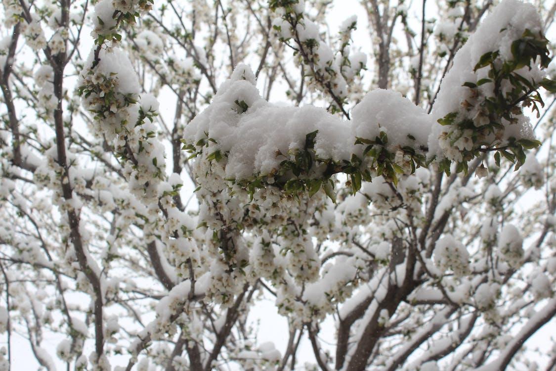 mishab, зима на весну, іран