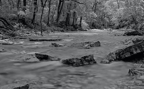 Free stock photo of black and white, creek, creek rocks