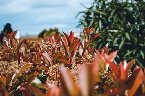 Kostenloses Stock Foto zu grün, himmel, natur, natürlich