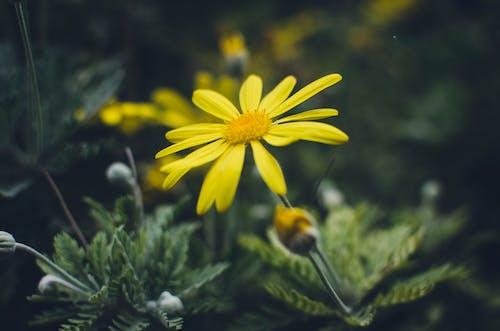 Kostenloses Stock Foto zu blume, gelb, goldene blume, gras