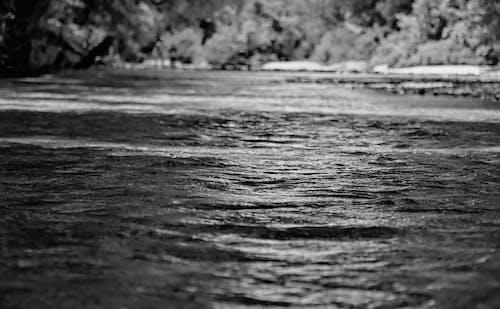 Free stock photo of black and white, creek, nature