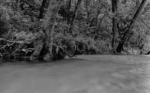 Free stock photo of black and white, creek, grass