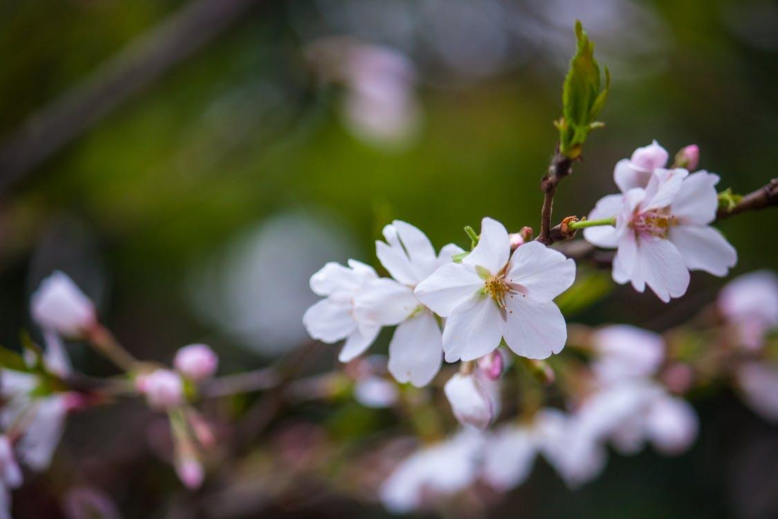 White Flower Plant Photo