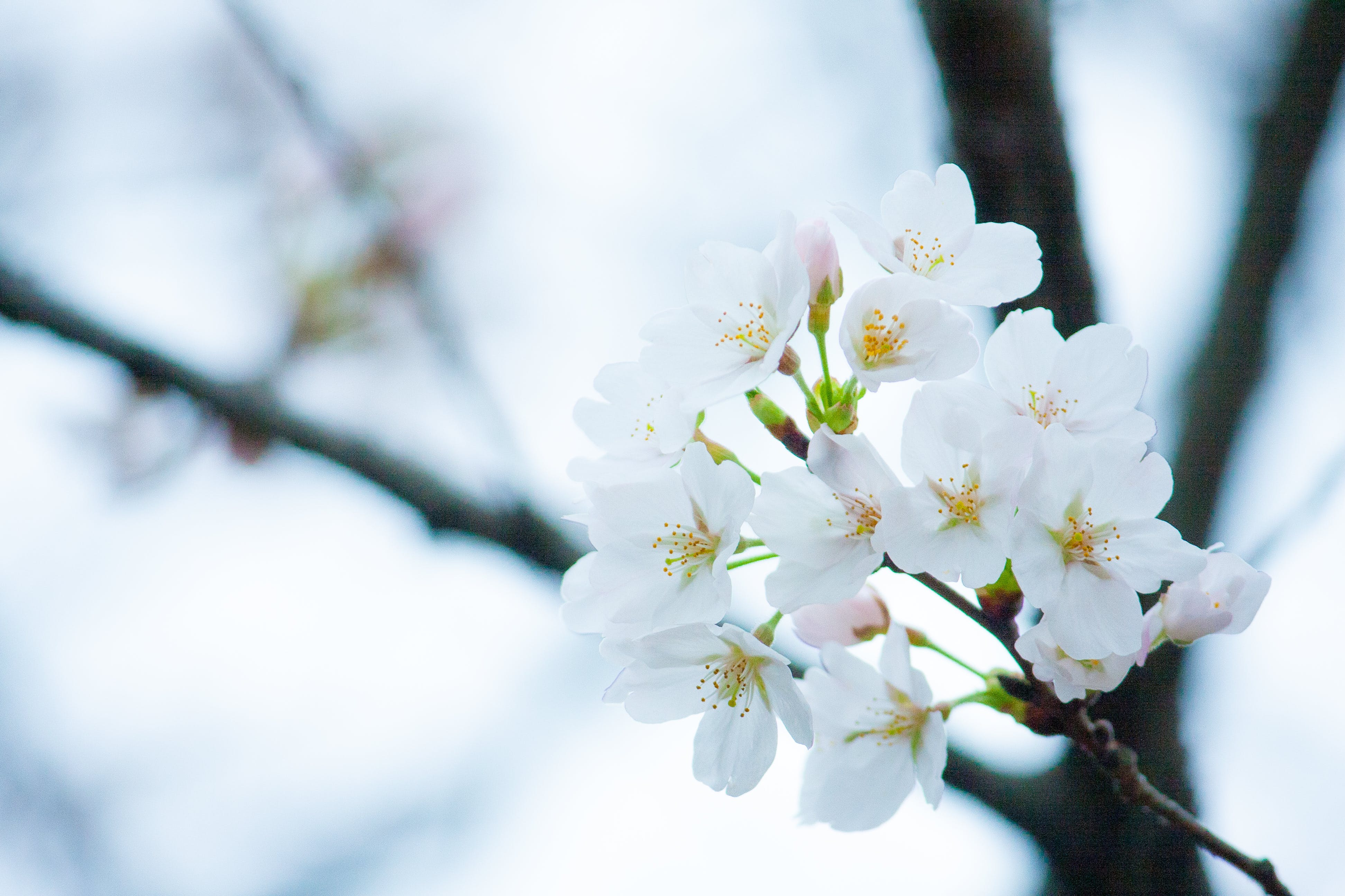 White Blossom Flower Selective Focus Photo