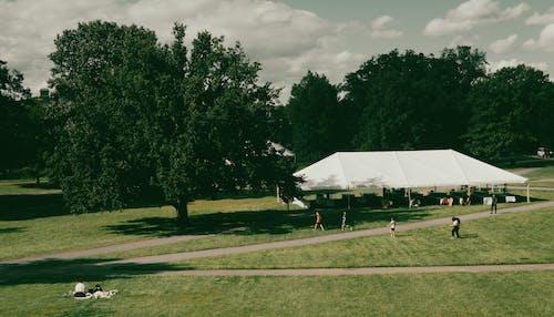 Бесплатное стоковое фото с активный отдых, гольф, дерево