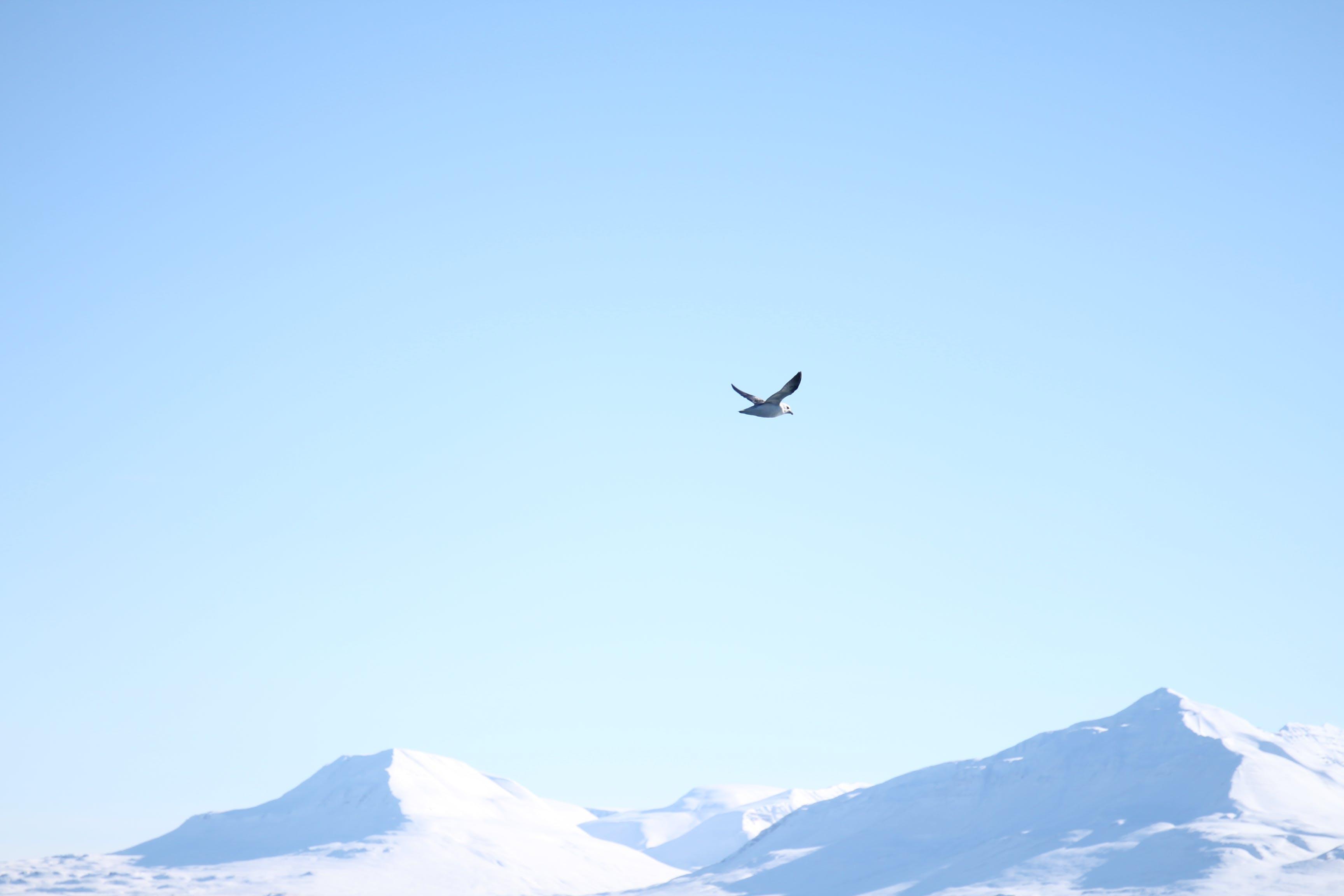 Foto profissional grátis de branco, céu, inverno, Islândia