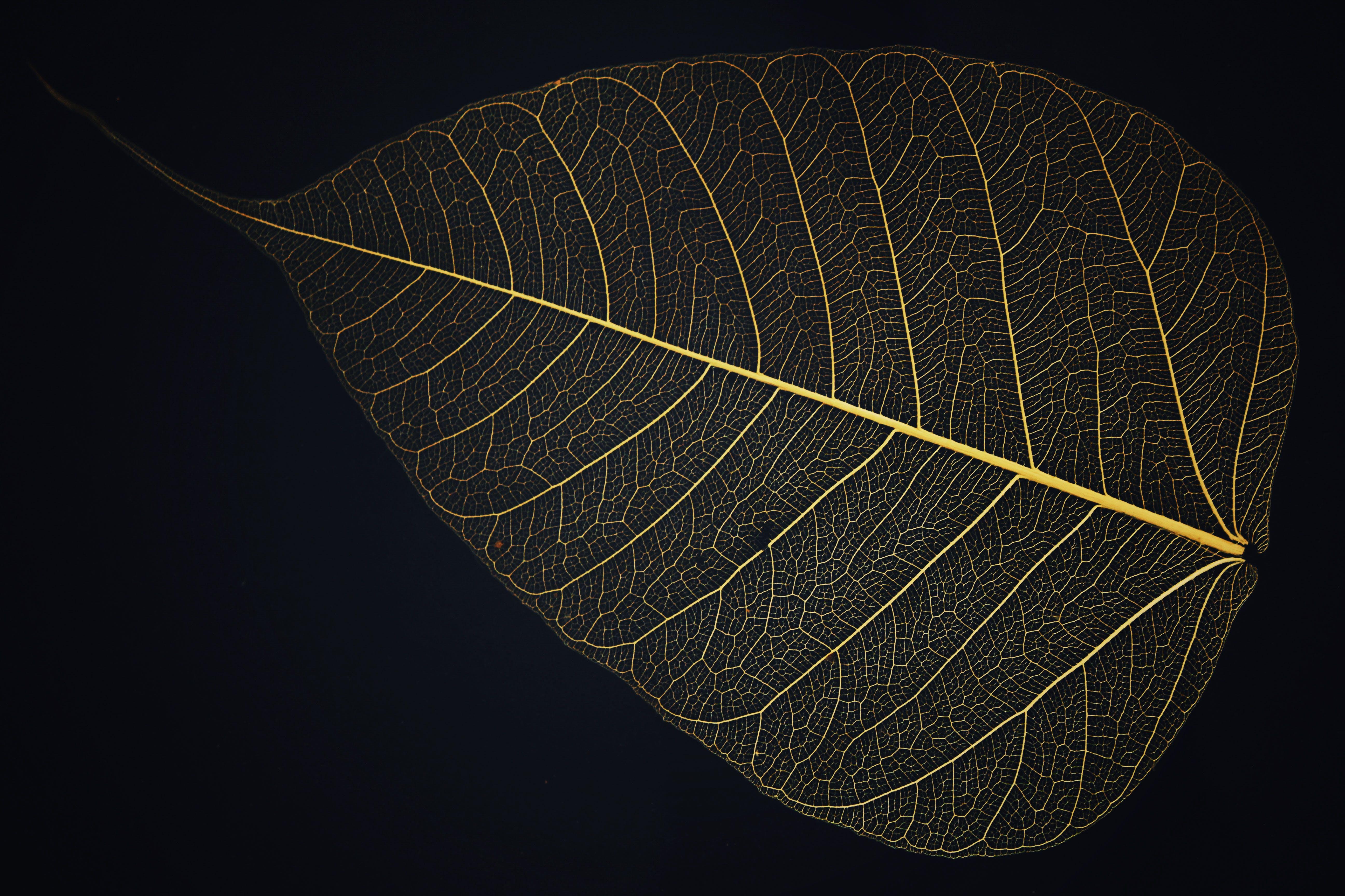 Free stock photo of dry, vintage, leaf, leaves
