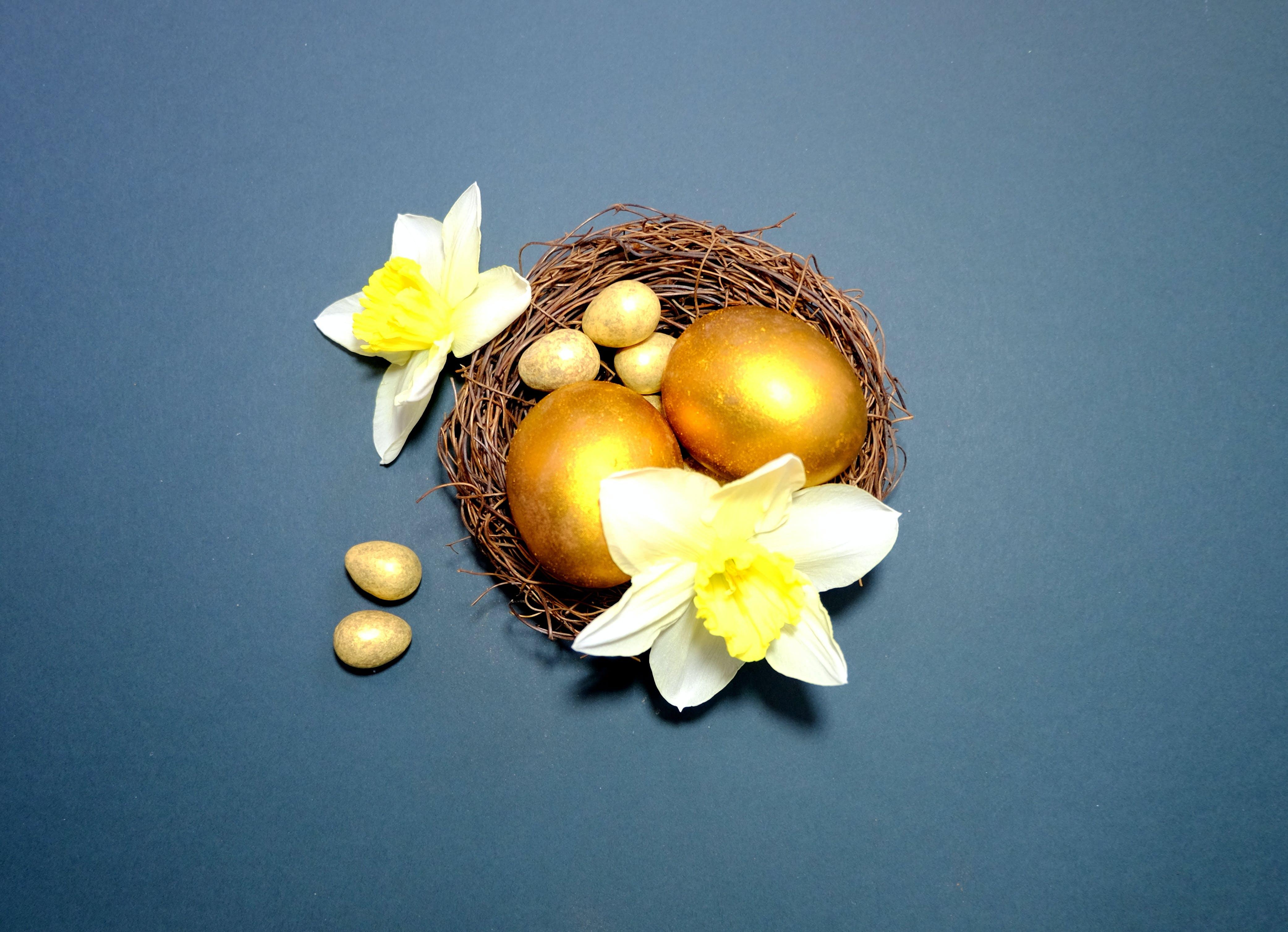 Free stock photo of flowers, easter, egg, eggs