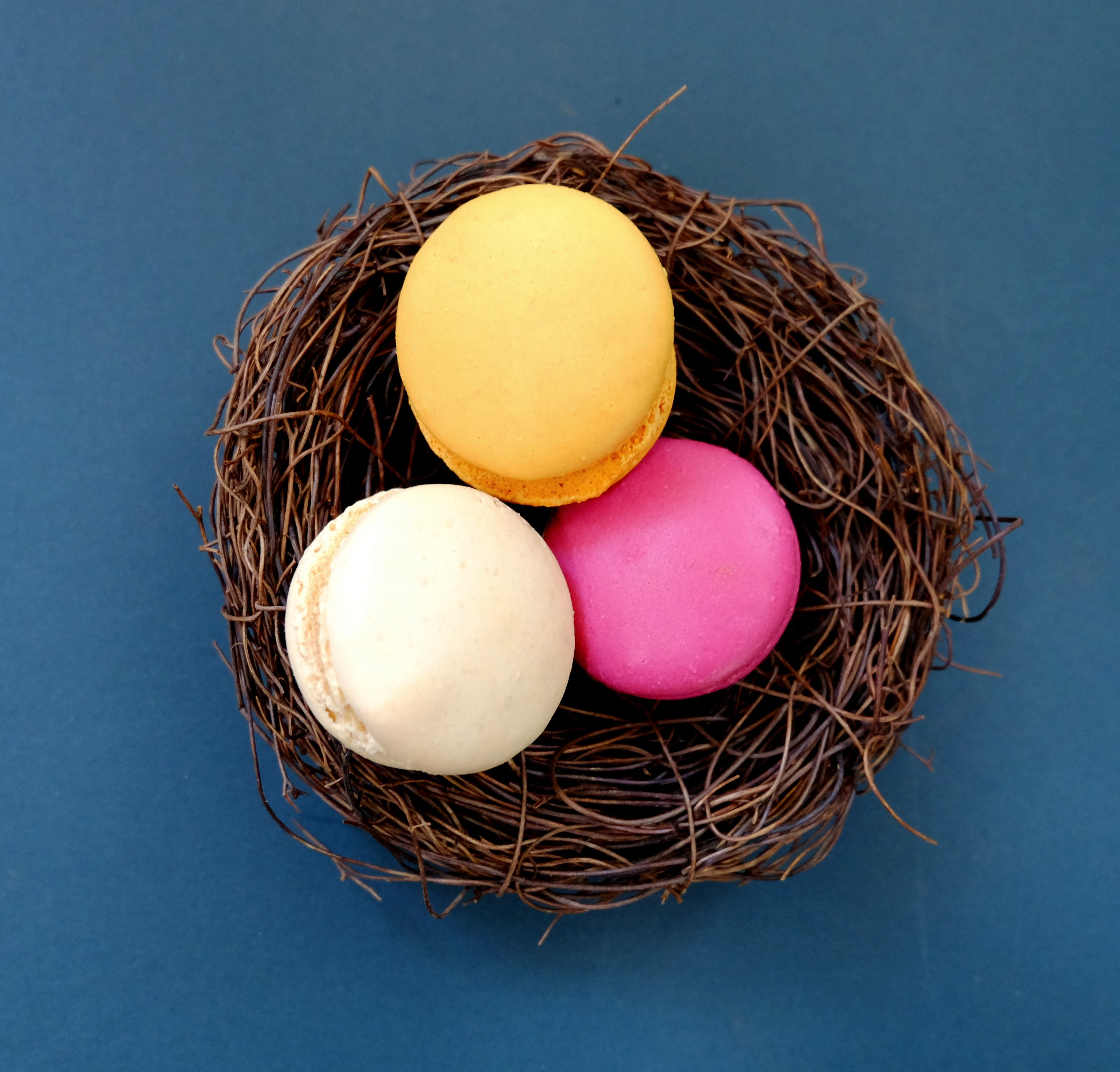 Free stock photo of blue, cute, easter, eggs