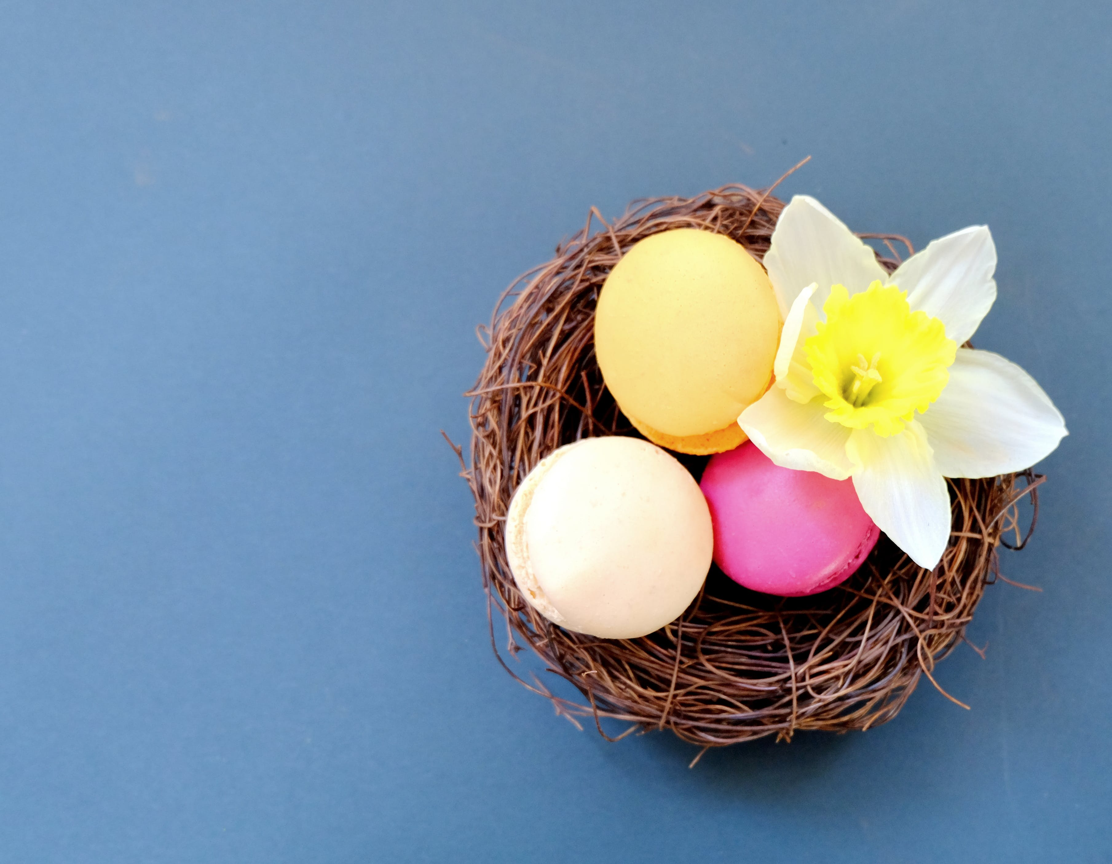 Free stock photo of blue, easter, flower, macaroons