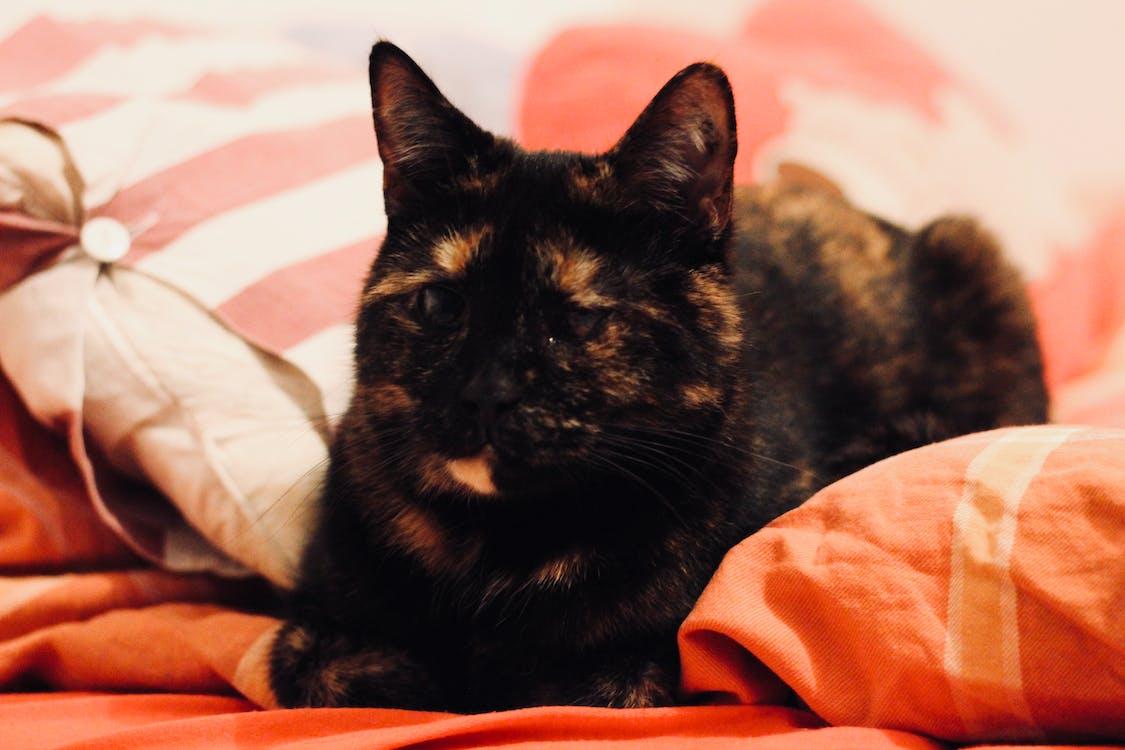 afslapning, kat, komfortabel