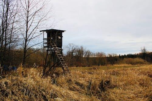 Foto d'estoc gratuïta de bosc, caçador, deshabitada, prat