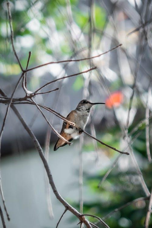 공원, 깃털, 나무의 무료 스톡 사진