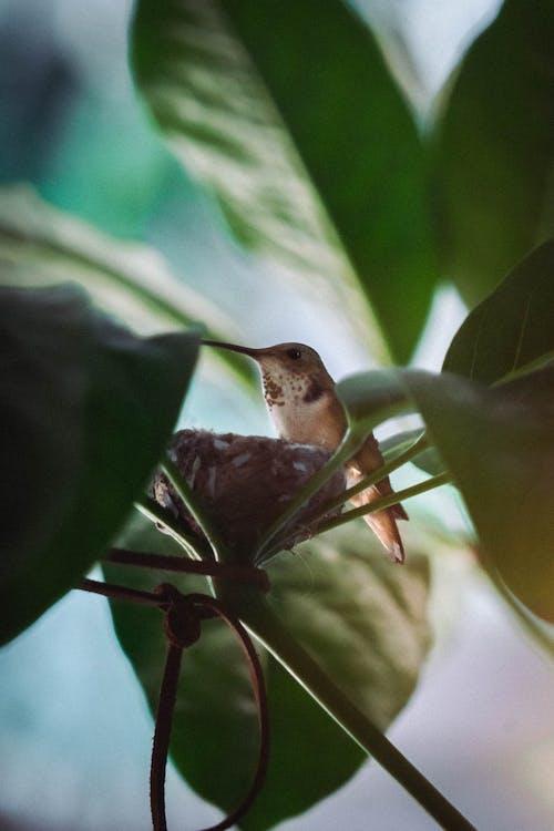 곤충, 꽃, 나무의 무료 스톡 사진