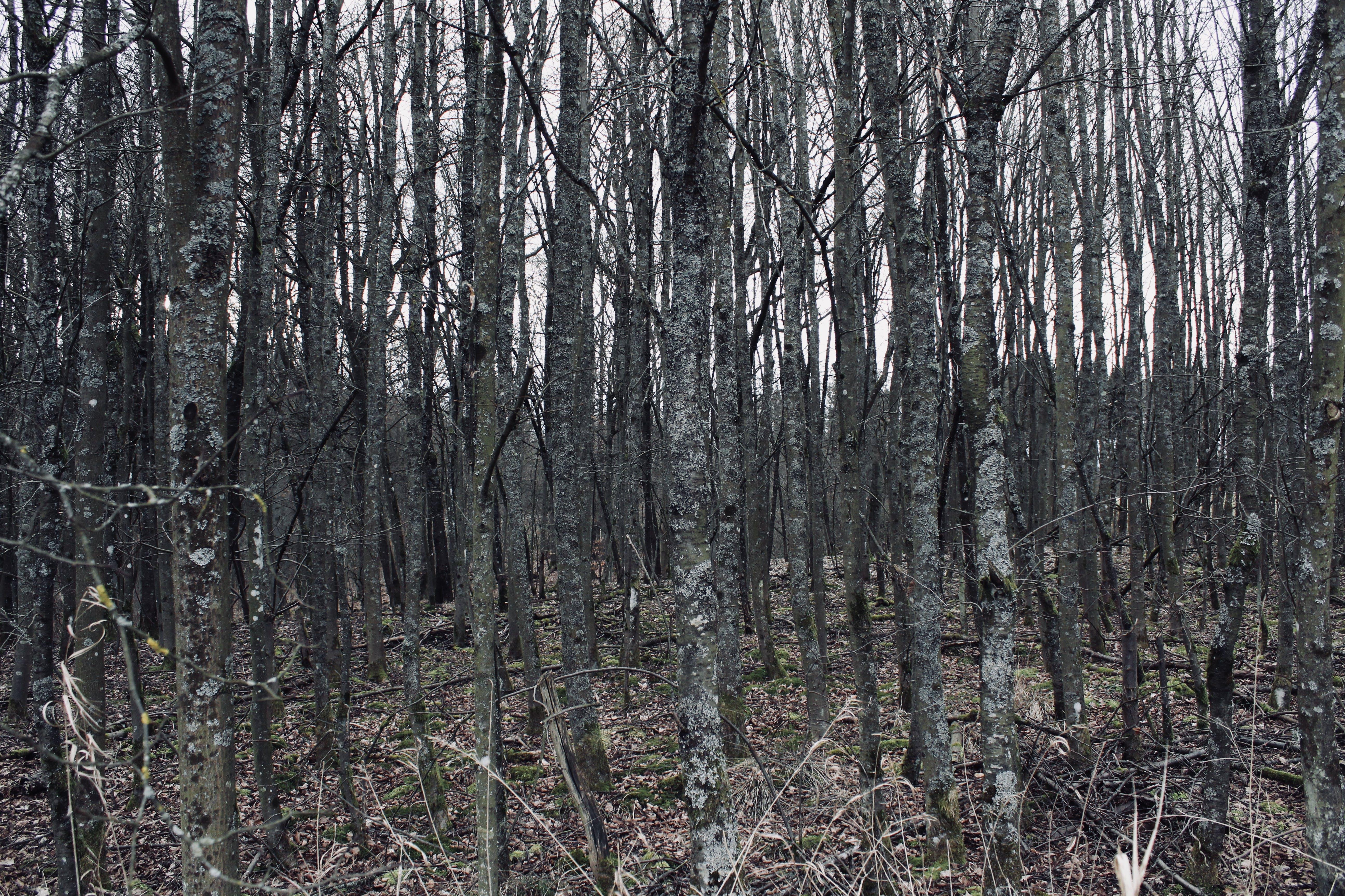 creepy, forest, many