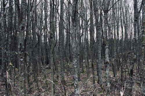 Foto d'estoc gratuïta de bosc, horripilant, molts, secret