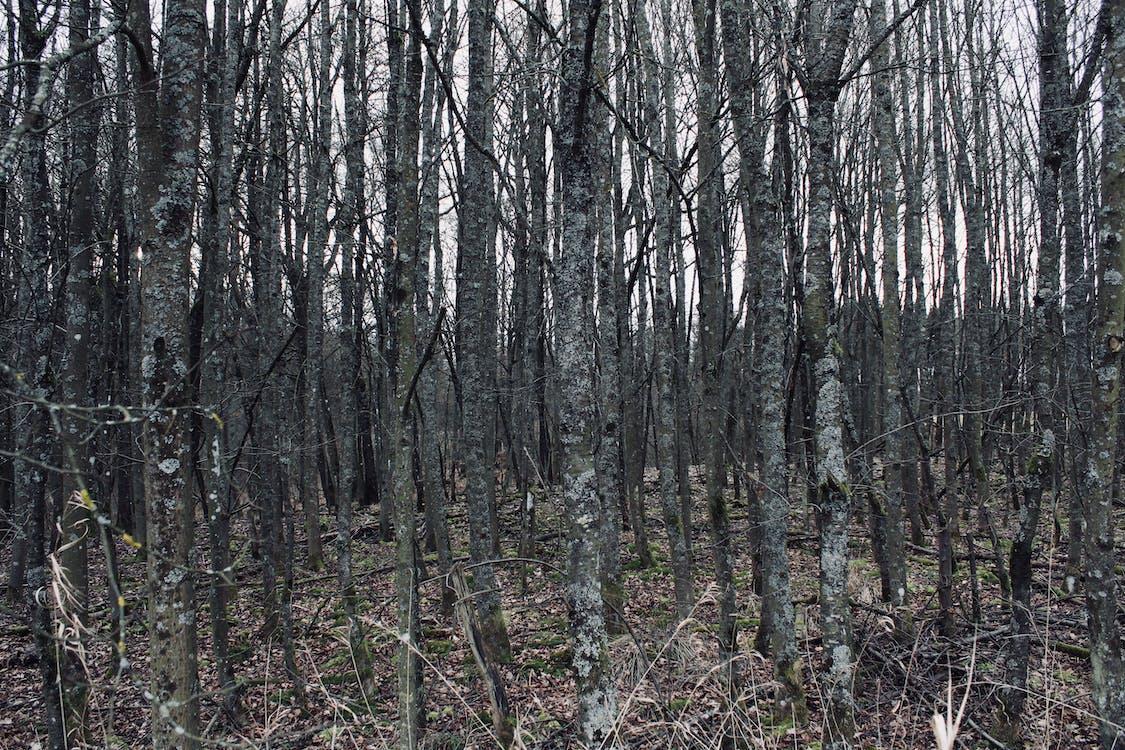 hemmelighed, mange, skov